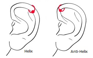 HELIX UND ANTI-HELIX (FORWARD HELIX)