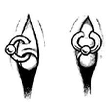 Piercing Intimbereich Frau