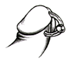 Piercing Prinz Albert